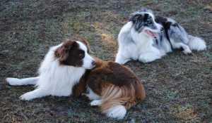 Lola with Zen