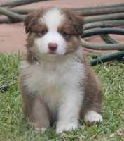 Finn 6 weeks - Marla and Rocq baby