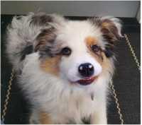 Basil 3 months