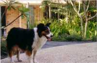 Bonnie our foundation bitch who passed away at 13 years in 2003