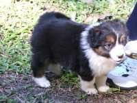 Maggie at five weeks