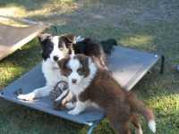 Cooper No.2 and Jessie who is Cherub's sister