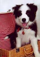 Baci - pretty little girl
