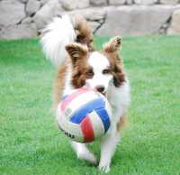 Coco playing ball